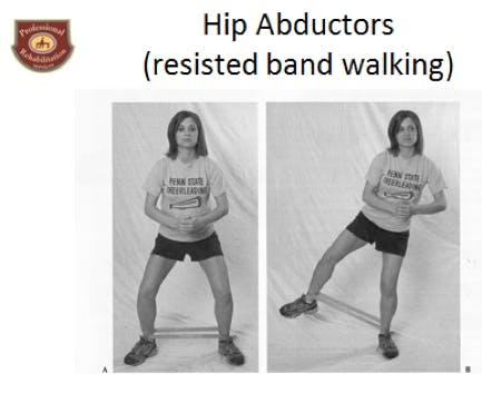 Hip Abductors