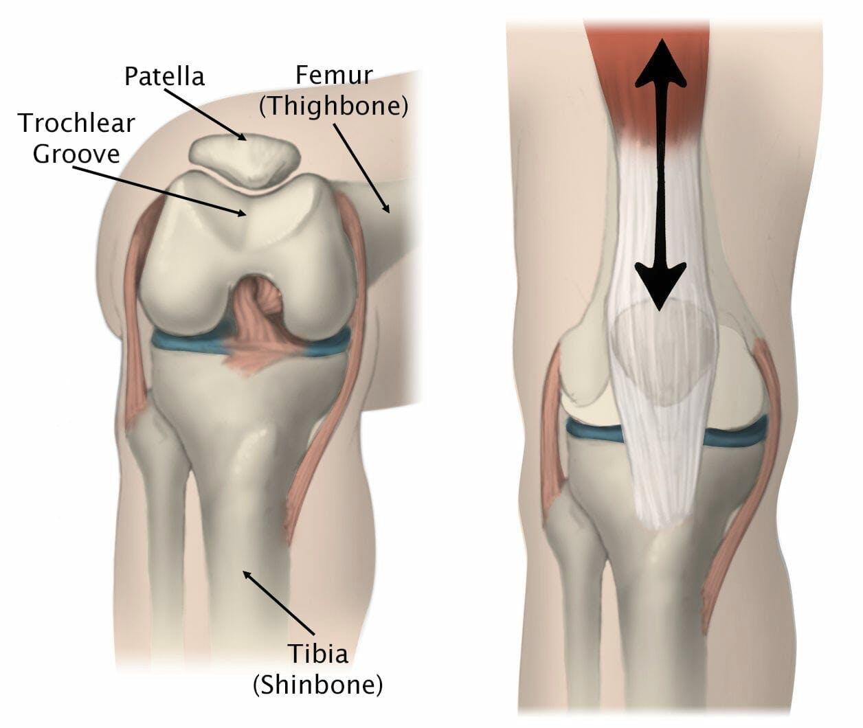 knee medical illustration patella