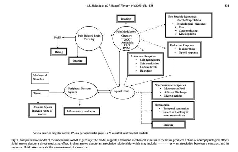 Mechanisms Manual Therapy