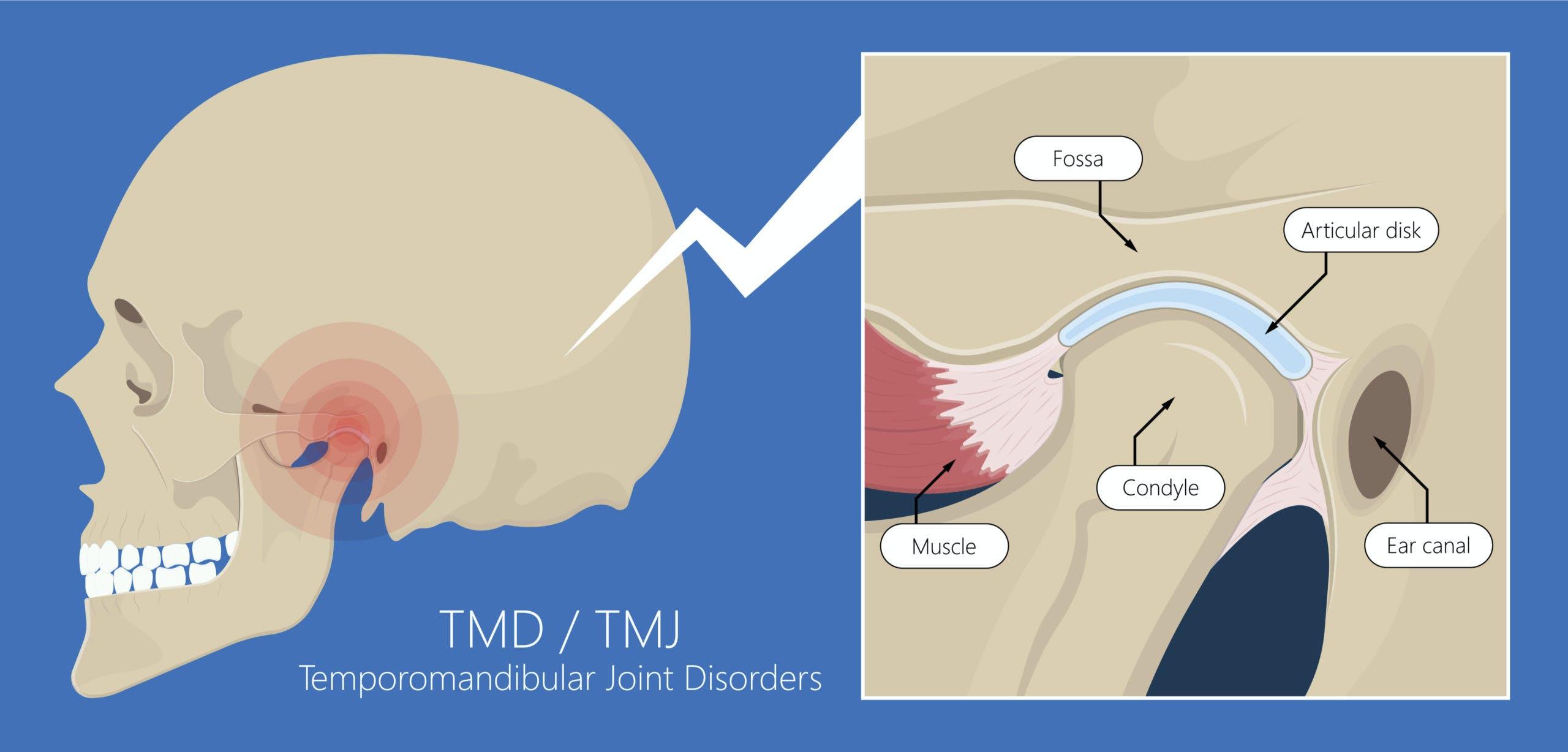 TMJ Anatomy