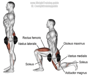 muscles during lunge