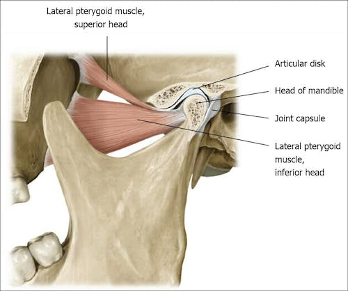 Tmj Jaw Pain T O P S Physical Therapy