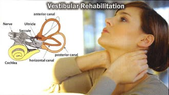Premier Rehab Physical Therapy | Vestibular Rehabilitation