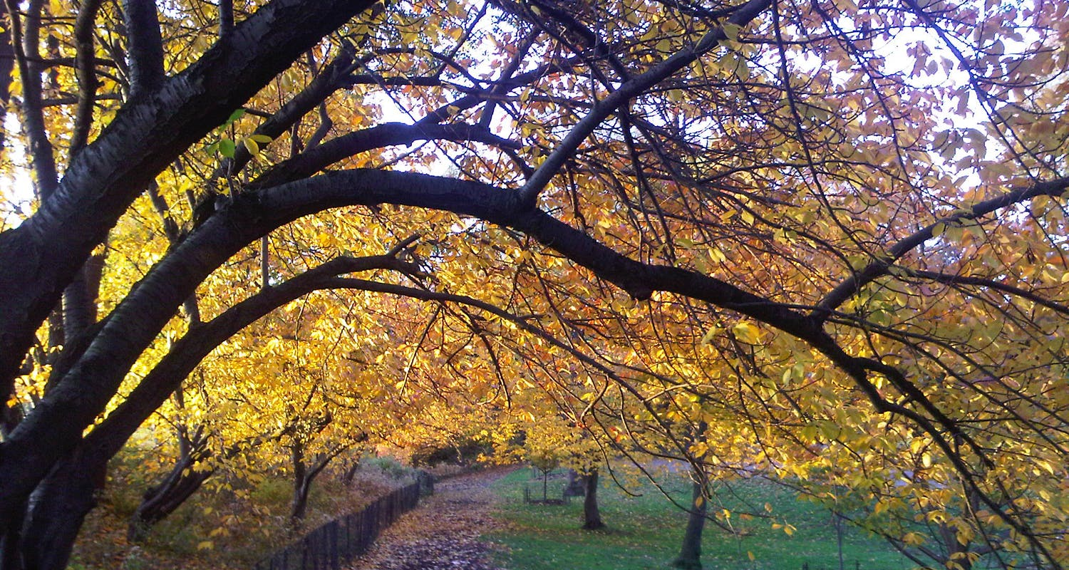 Australian Physio / Therapy Experts - Central Park in the Fall