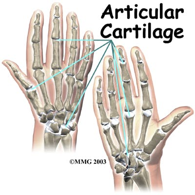 Diagram of Articular Cartilage