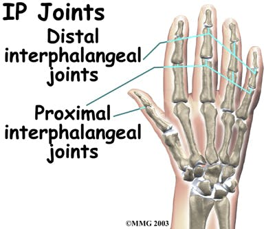 Diagram of interphalangeal (IP) joints
