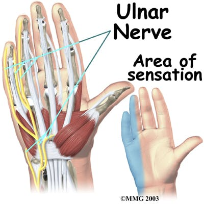 Diagram of Ulnar Nerve