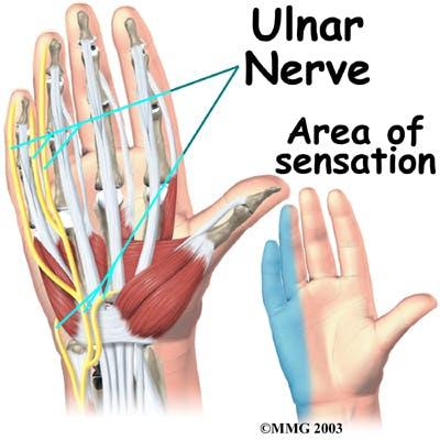 Diagram of Ulnar Nerve